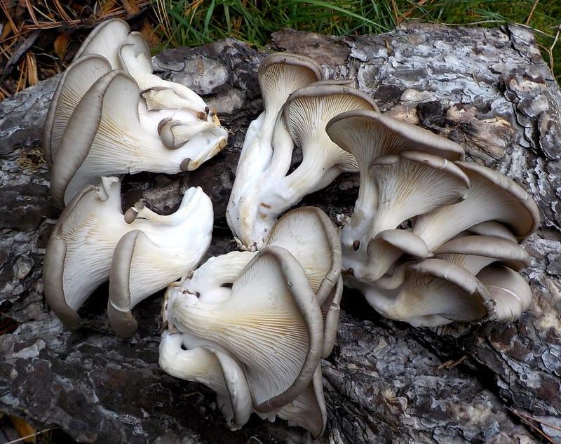 Healthiest Mushrooms To Eat