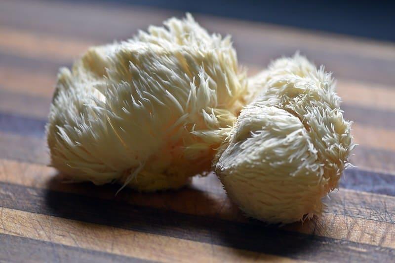 Growing Lion's Mane Mushrooms